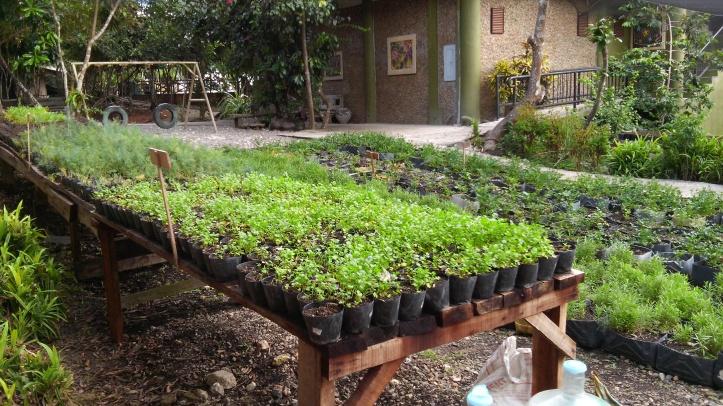 Organic farming at Bohol Bee Farm